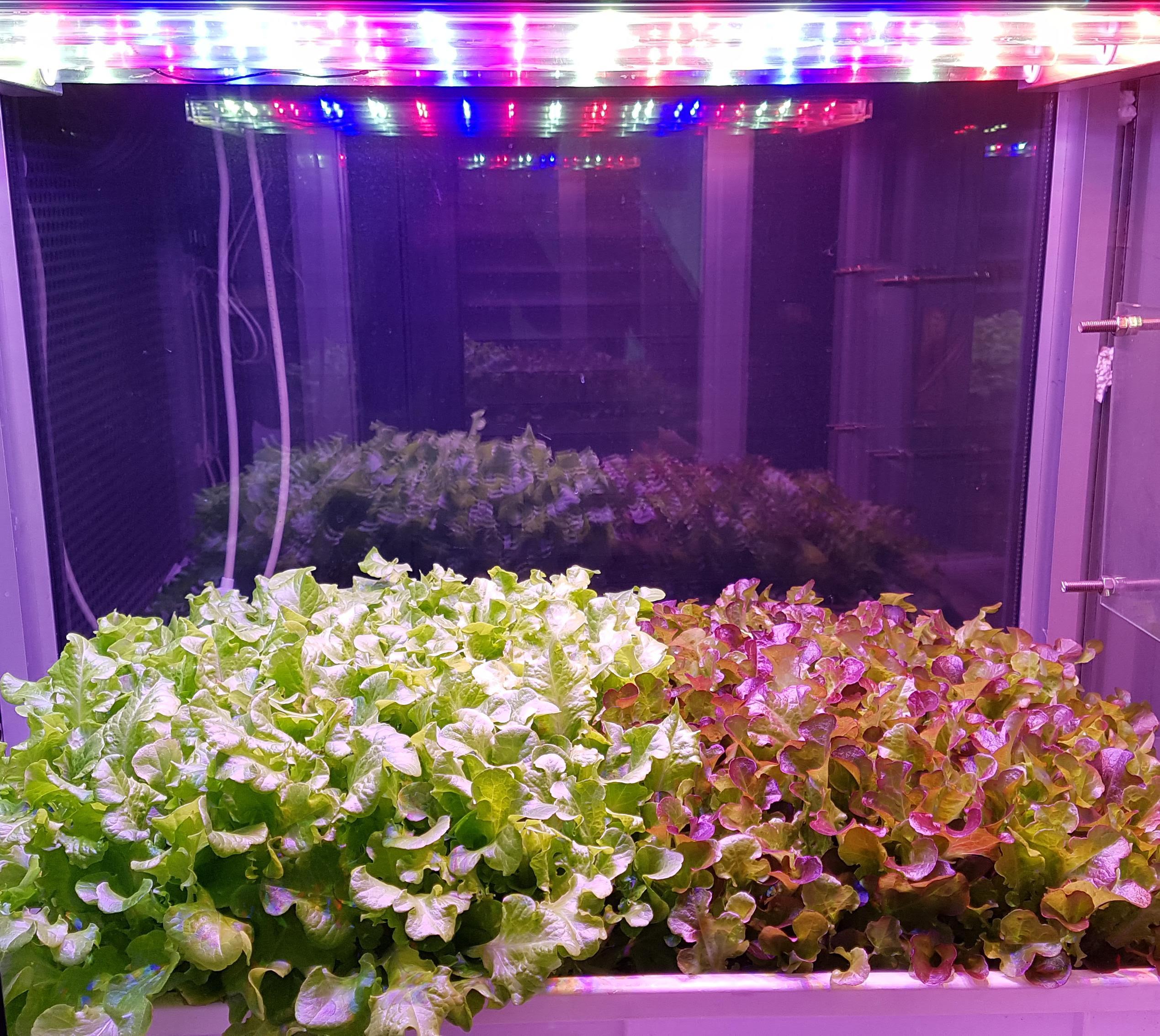 Illuminazione a led e radiazioni UV al servizio dell'agricoltura